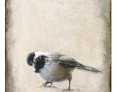 Little Bird Print Instant Download, Chickadee, Bird Wall Art, Fine Art Photography Download, 5 x 7, Earth Tones, Bathroom decor, Hallway Art