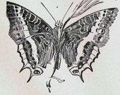 Butterflies XXVIII 1892 Victorian Entomology Antique Chart Of Pretty Insects To Frame