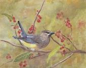 Zedernseidenschwanz Vogel ist eine Reproduktion von meinem ursprünglichen Gemälde ACEO
