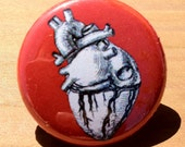 Anatomical heart...for your sleeve design - Button, Magnet, or Bottle Opener