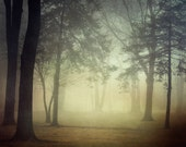 """Fall Photography, Fog, Forest Landscape Photography, Trees, Woodland, Autumn, Mist, Nature, Earth Tones, """"Inner Glow"""""""
