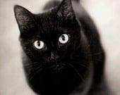 "Black Cat Art Print - 8x10 Photo Print - Halloween Fine Art Photography Print -  Black and White Photo - Animal Art Print - ""Black Cat"""