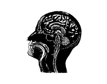 CLEARANCE Anatomical Brain Rubber Stamp