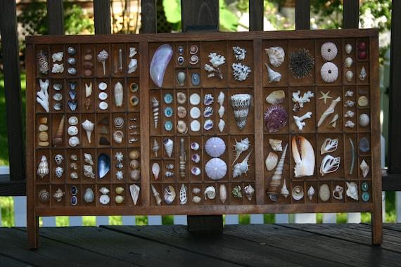 Vintage Seashell Printers Tray II