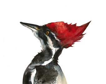 "pileated woodpecke art, woodpecker art, bird art- 11 x 17"" large print, red, black and white, nature, rustic, bird art"