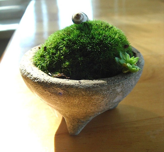 1 ZEN Mini Concrete Moss Bowl Planter Terrarium