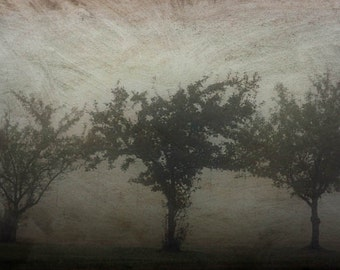 Tree photograph, fog print,  home decor, Fine Art Photograph