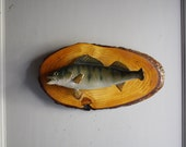 vintage mounted fish taxidermy