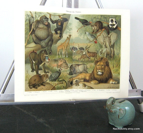 1870s African Animal Chromolithograph Print Vibrant Color