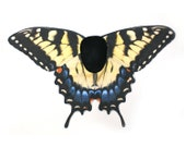 Realistic Swallowtail Butterfly Costume Wings, Papilio Glaucus, Eastern Tiger Swallowtail