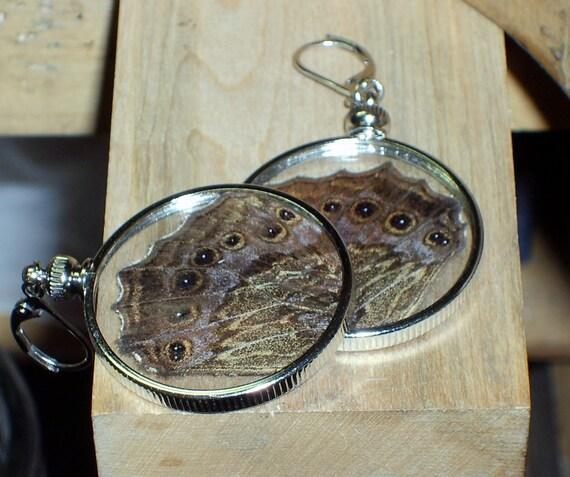real moth wing earrings