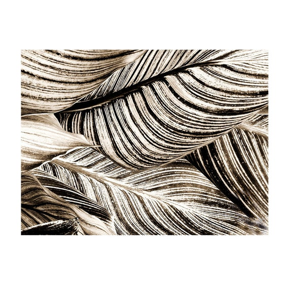 Modern Leaf Sepia Abstract Photograph Canna Leaves Black White Nature Home Decor