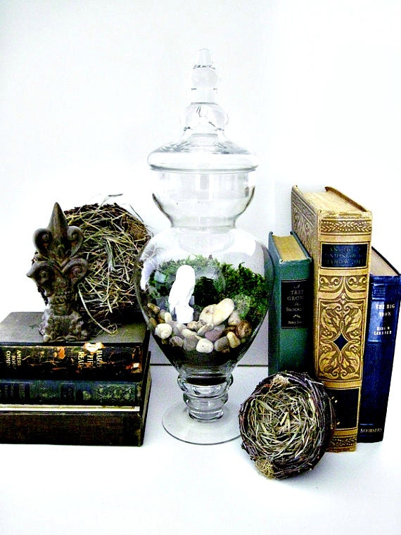 The White Owl Plant Terrarium - Easy to care for houseplant - Fern Moss LARGE Glass Apothecary Jar with Barn Owl Figurine