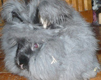 She is a LOVE - Adopt a Angora bunny for an 3 months,and receive a skein of yarn per month