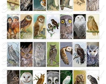 Owls - Domino Size 1 x 2 inch - INSTANT DOWNLOAD - Digital Collage Sheet