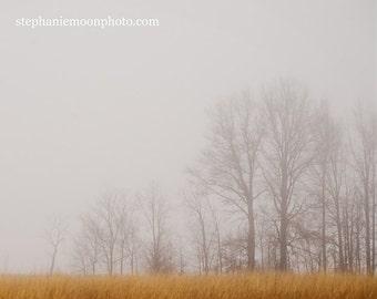 Fine Art Tree Photography, Landscape, Nature,