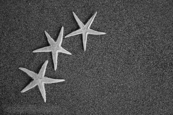 SALE three starfish in the sand 3 - 5x7 black and white beach photo - sand and petals photography