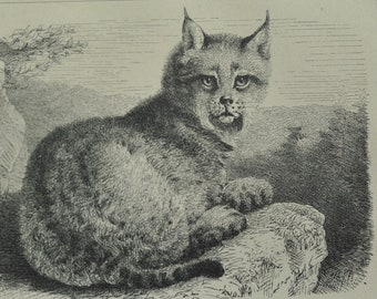 1874 Antique Steel Engraving of a Sea Otter, Cormorant, European lynx, and Racoon
