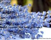 Blue Velvet English Lavender-New 2015 crop-about a 3 oz bundle on  stems 10+ inches long