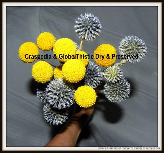 10 Dried Globe thistle Long Stems-Purple blue flowers-10 Dried Craspedia Billy balls Yellow