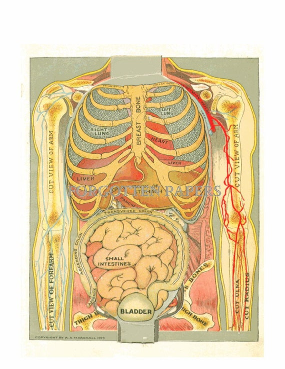 SALE - 1919 Female Anatomy Print - Layered - Dimensional - Full COLOR Litho - RARE - Reproductive System