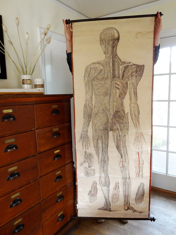 RESERVED for K. antique anatomical poster, life size medical illustration from Europe, circa 1850s