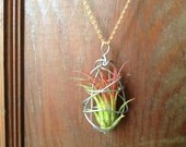 NEW DESIGN Living Air Plant Necklace