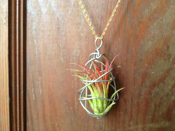 New design living air plant necklace for Plante pendante