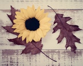 Fallen - Fine Art Photograph - yellow sunflower brown leaves wood table still life nature home decor print