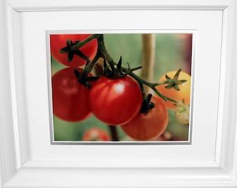 Tomatoes - Garden Harvest Fruit Kitchen Photography Decor Red Orange Green Fine Art Metallic Print - 8x10 Photograph