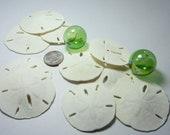 Beach Decor Sand Dollar Shells - Nautical Decor LARGE Sand Dollars for Beach Weddings -12pc