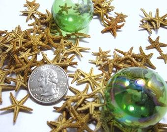 "Beach Decor Small Brown Starfish - Nautical Decor or Beach Wedding Starfish, 12PC, 1/2 to 1"""