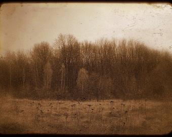 Landscape Photography, Fall Trees, Autumn, Haunted Woods, Woodland, Fairy Tale Art, Sepia Tone, Brown, Neutral, Fog, Dreamy Landscape