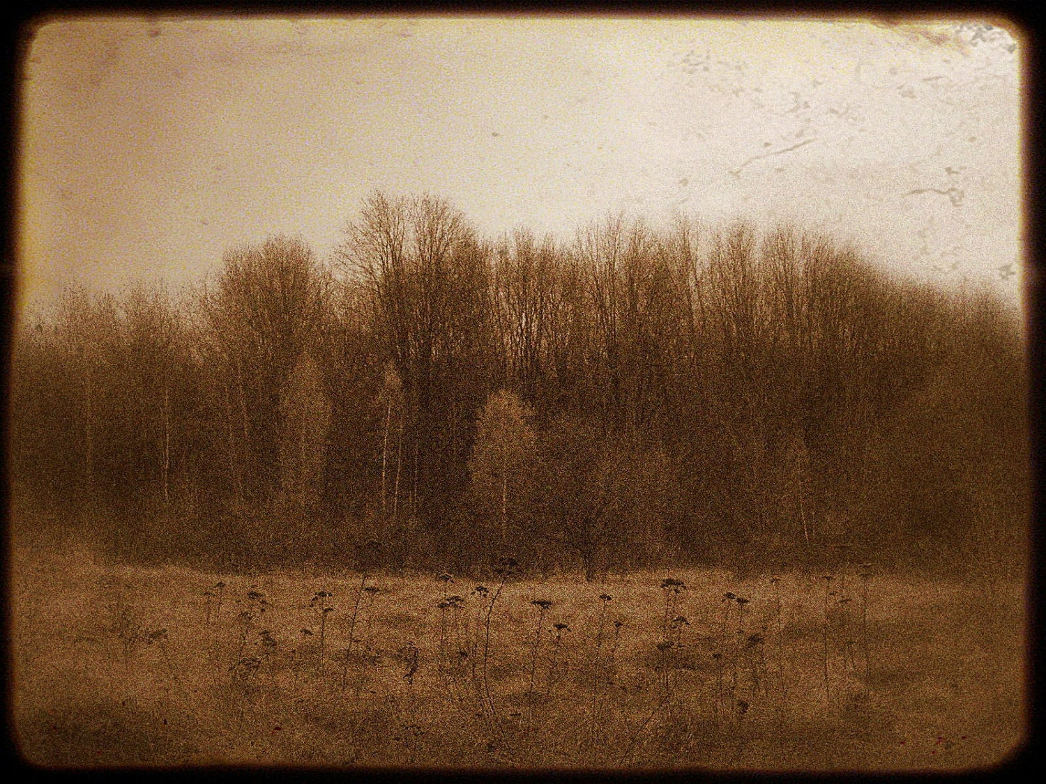 Dreamy Landscape Photo Vintage Sepia Forest by ...