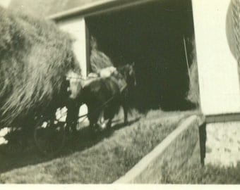 1932 Farm Horse Pulling Giant Hay Wagon Into Barn Antique Vintage Photo Black and White Photograph