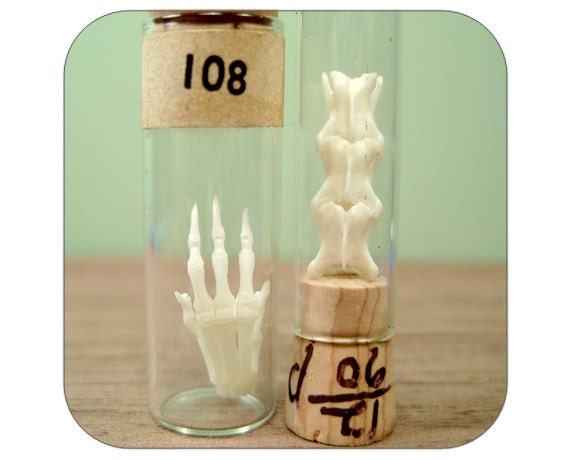 Specimen Collection in Vintage Vials - Rodent Bones -  Paw and Partial Spine - Qty. 2 - Lot 1315