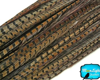 "Pheasant Tail Feathers, 50 Pieces - 20-26"" NATURAL Ringneck Pheasant Tail Wholesale Feathers (bulk) : 2303"