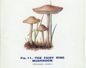 Fairy Ring Champignon, Reproduction Vintage Mushroom Print 1926 Edible and Poisonous Fungi 11, Library Decor, Mycology Print