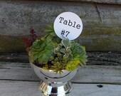 Succulent Wedding Dish Garden in a shiny silver pedestal container