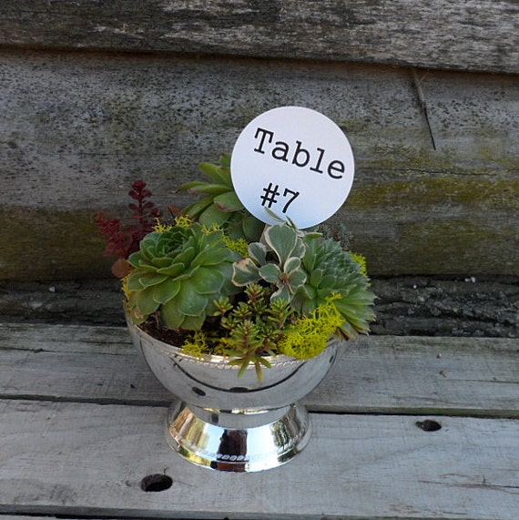 Items similar to succulent wedding dish garden in a shiny silver pedestal container on etsy - Dish garden containers ...