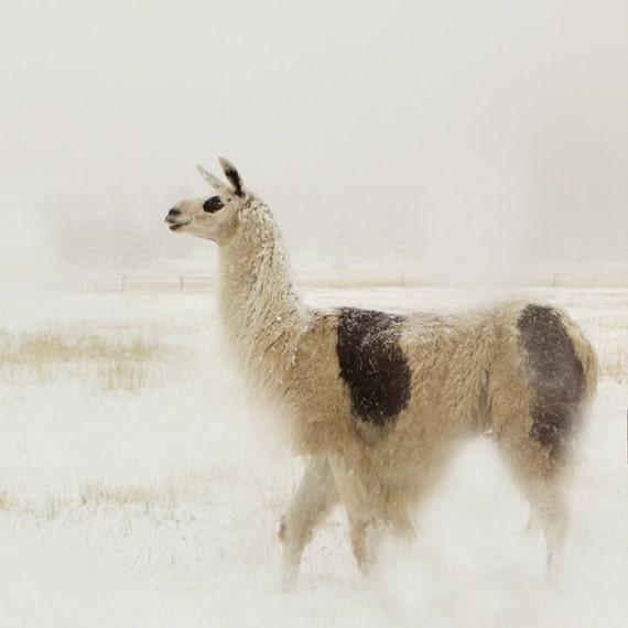 Llama Photography Large Wall Decor Nursery Decor Llama in the Snow
