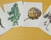 Botanical Art Cards, Series 05 - Vegetables