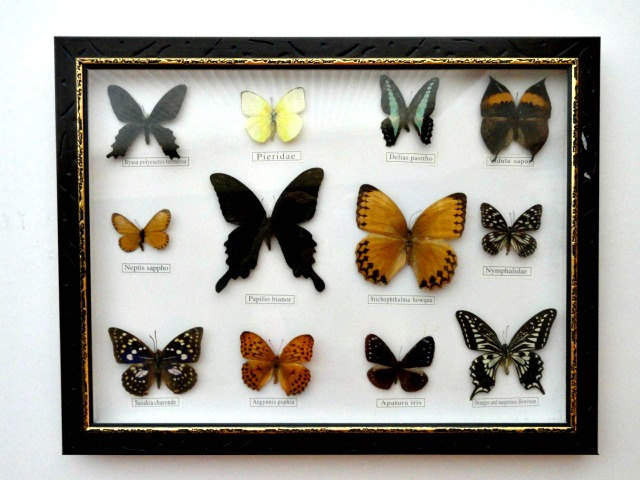 Vintage framed butterfly collection shadow box frame for Wedding dress shadow box for sale