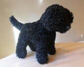Reserved for Tessa - Black Lusciously Soft Labradoodle / Standard Poodle