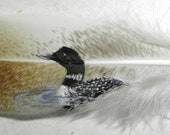 Swimming Loon Hand Painted on Turkey Feather, Framed