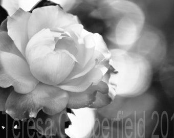 Rose Photo, Black and White, 8 x 12, Fine Art Photo Print, Soft Pink Rose, Northwest Home Decor wall art, Summer Garden Flower, Look at Me