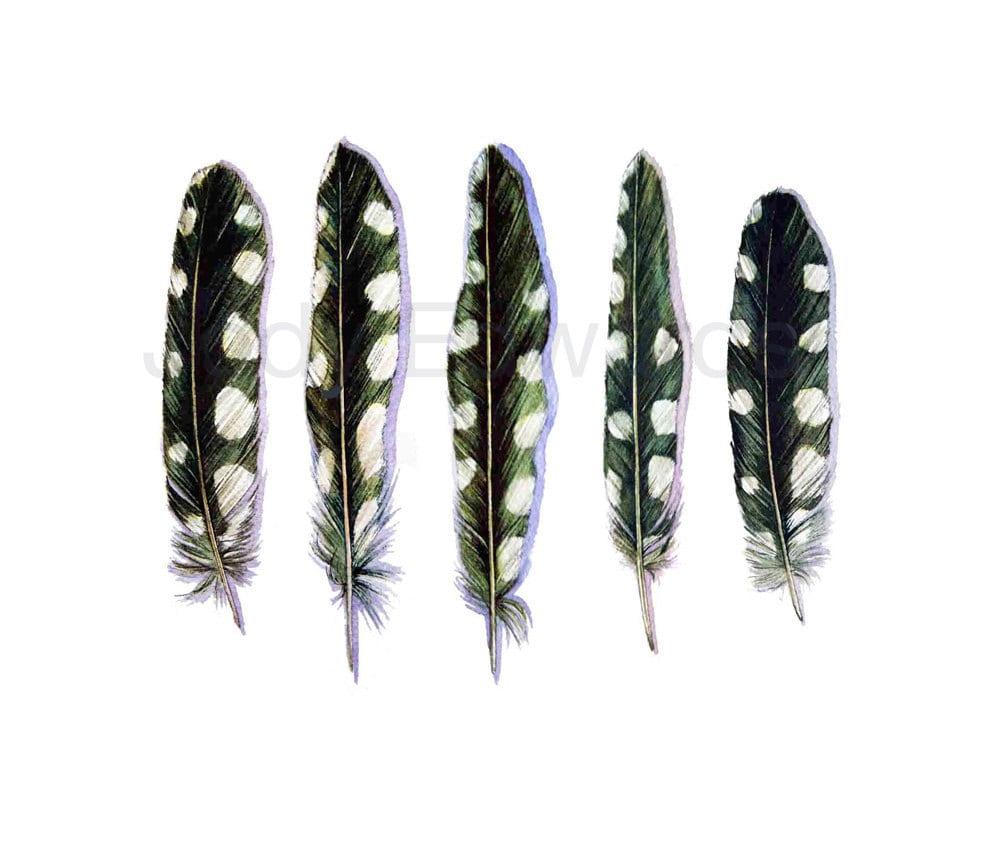Downy Woodpecker Feathers Woodpecker Feathers Archival