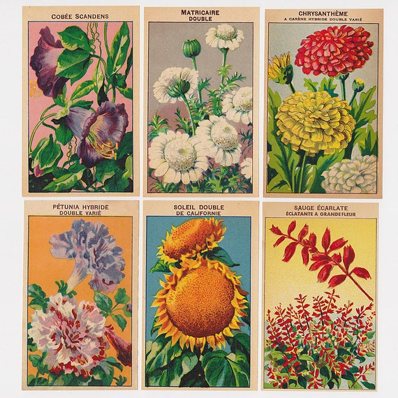 Vintage Flower Packet Labels French 24 All Different  - Set 3