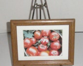 Tomatoes Photo - Framed Photograph - Silly Tomatoes - Funny Face Tomatoes - 6 x 8 - Tomato Bunches - Red Ripe Tomatoes