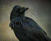 Raven Nevermore 8x12 Premium Lustre Print